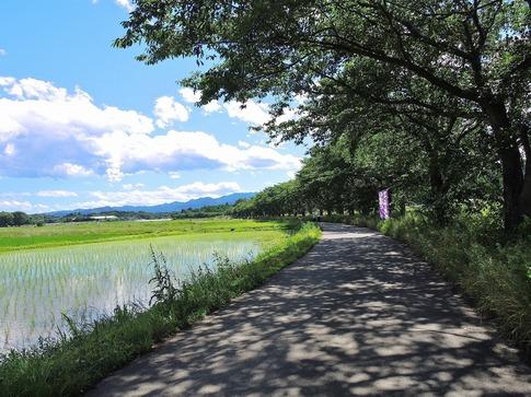 2019-06-16  Resized  ラベンダー千年の苑(嵐山町)‥ (3).jpg