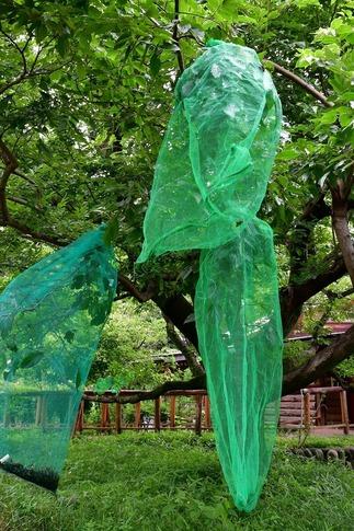 2019-06-23  A-Resized  蝶の里公園(嵐山町)‥ (1).jpg