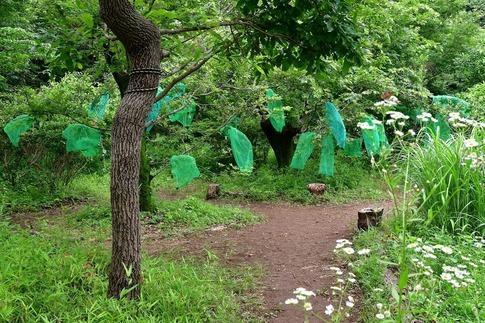 2019-06-23  A-Resized  蝶の里公園(嵐山町)‥ (2).jpg