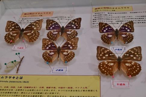 2019-06-23  A-Resized  蝶の里公園(嵐山町)‥ (8).jpg