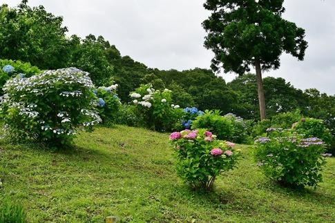 2019-07-06  Resized  秩父高原牧場‥ (8).jpg