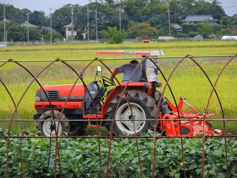 2019-09-28  Resized  川島の田圃‥ (1).jpg