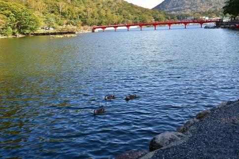 2019-10-05  Resized  赤城神社‥ (1).jpg