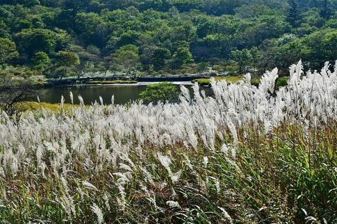 2019-10-05  Resized  赤城覚満渕‥ (23).jpg