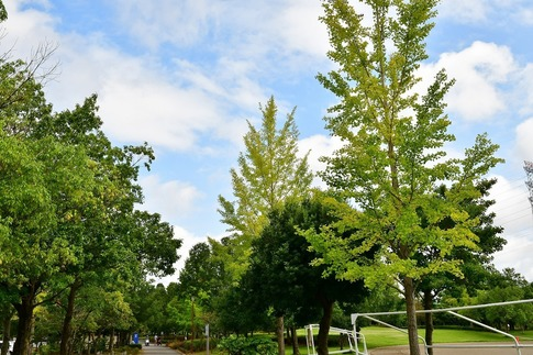 2019-10-06  Resized  平成の森公園(川島町)‥ (2).jpg