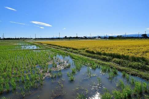 2019-10-13  Resized  台風19号通過跡(川島町)‥ (3).jpg