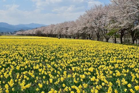 2020-04-04  Resized  岩井親水公園(群馬県東吾妻町)‥ (2).jpg