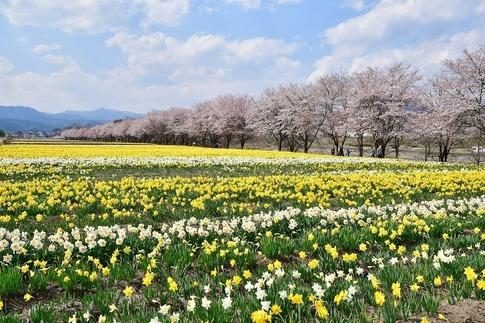 2020-04-04  Resized  岩井親水公園(群馬県東吾妻町)‥ (3).jpg