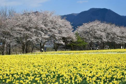 2020-04-04  Resized  岩井親水公園(群馬県東吾妻町)‥ (4).jpg