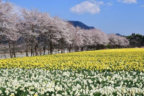 2020-04-04  Resized  岩井親水公園(群馬県東吾妻町)‥ (5).jpg