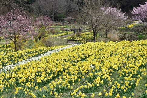 2020-04-04  Resized  岩井親水公園(群馬県東吾妻町)‥ (8).jpg