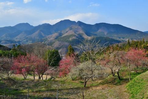 2020-04-04  Resized  箱島湧水ほか(群馬県東吾妻町‥ (3).jpg