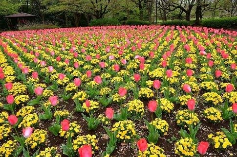 2020-04-22  大宮花の丘農林公苑‥ (3).jpg