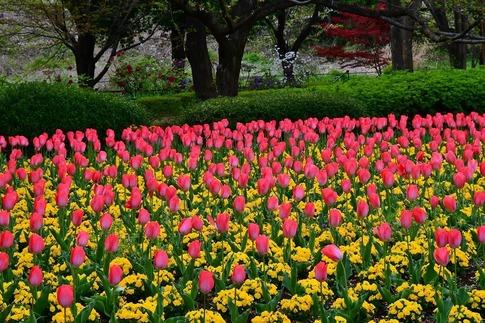2020-04-22  大宮花の丘農林公苑‥ (40).jpg