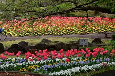 2020-04-22  大宮花の丘農林公苑‥ (7).jpg