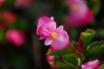A-Resized 花の丘公園 (4).jpg