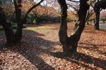 A-Resized 代々木公園‥ (4).jpg