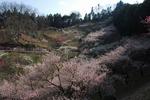 A-Resized 梅の公園 (11).jpg