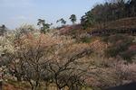 A-Resized 梅の公園 (12).jpg