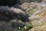 A-Resized 梅の公園 (14).jpg