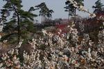 A-Resized 梅の公園 (9).jpg