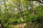 A-Resized 美の山散歩‥ (3).jpg