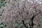 A-Resized 姫路城‥ (4).jpg