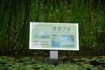 ★森林公園‥ F) (10).jpg