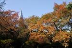 A−Resized 晩秋の新宿御苑‥ (13).jpg