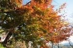 B-Resized 桜山の紅葉 (10).jpg