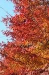 B-Resized 桜山の紅葉 (2).jpg