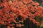 B-Resized 初冬の武蔵丘陵森林公園‥ (10).jpg