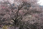 B-Resized 梅の公園 (12).jpg