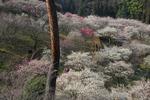 B-Resized 梅の公園 (13).jpg