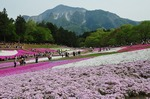 B-Resized 羊山公園の芝桜‥.jpg