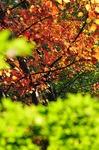 B-Resized 立冬の武蔵丘陵森林公園‥.jpg