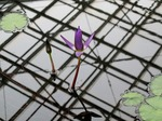 B-Resized 温室の花‥(神代植物公園) (2).jpg