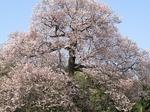 B-Resized 高尾さくら公園‥(北本市) (17).jpg