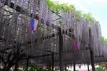玉敷神ふじ祭り‥ (4).jpg