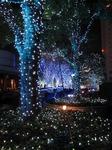 新宿サザンテラスのイルミネーション (1).jpg