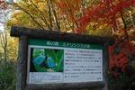 C-Resized 晩秋の比企丘陵‥八丁湖 (9).jpg