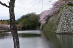 C-Resized 姫路城‥(終) (15).jpg