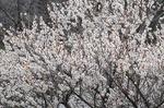 D-Resized 早春の武蔵丘陵森林公園‥ (11).jpg