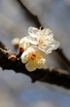 Resaized 早春の上尾丸山公園‥.jpg