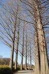 Resaized 早春の上尾丸山公園‥ (1).jpg