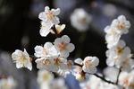 Resaized 早春の上尾丸山公園‥ (4).jpg