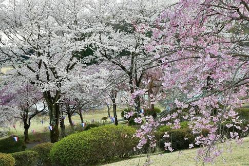Resized  つがの里(栃木県栃木市)‥ (6).jpg