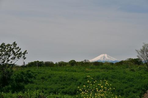 Resized  富士山‥ (1).jpg