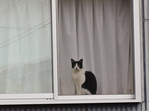 Resized  窓辺の猫‥ (1).jpg
