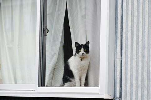 Resized  窓辺の猫‥(2).jpg